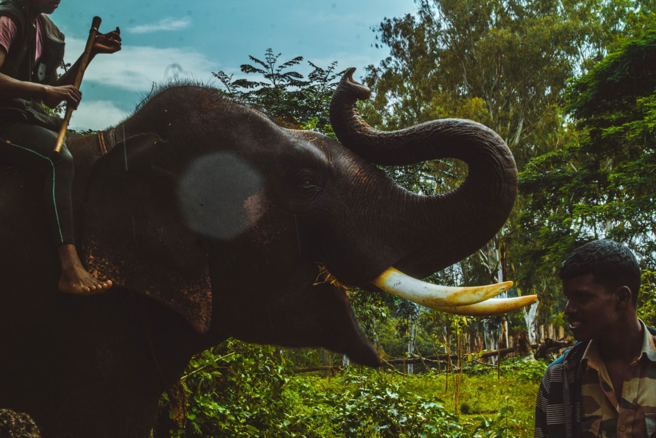 Why You Shouldn't Ride an Elephant in Vietnam - Charlie on Travel