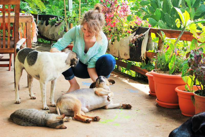 Small - House Sitter Costa Rica 3